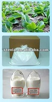 Natural and green Stevia dried powder