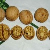 Chinese walnuts in Shell