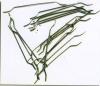Hooked-end Steel Fiber