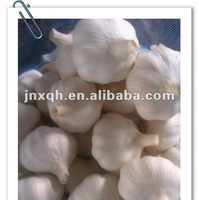 5.5cm-jinxiang fresh pure white garlic