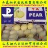 Chinese Fresh Ya Pear