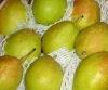 Fresh Xiang Pear