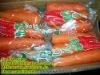 HOT HOT !!(XIAMEN)FARMLAND VEGETABLE OF CARROT IN CHINA