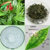 high quality green tea extract Epigallocatechin gallate EGCG 989-51-5