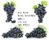 Major supply Anthocyanidin/Anthocyanin (UV 5%-25%)--Black currant P.E.