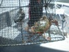crab trap net
