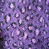 fancy centipede fancy feather yarn for sock knitting weaving