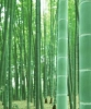 Thin bamboo sticks
