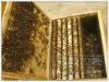 very popular export type bee hive