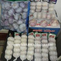 Jinxiang fresh garlic