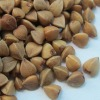 High Quality whole roasted buckwheat kernel