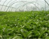 High Pure Stevia factory
