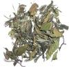 Organic White Tea,White Peony Tea