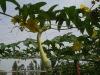 Vegetable net