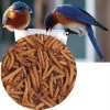 Nutritional Dried Mealworms for your Wild Birds