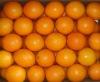 high quality Navel orange
