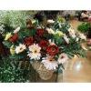 Promotion Artificial flower arrangement real touch flower wholesale