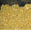 New crop IQF frozen sweet corn kernels