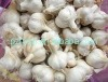 cangshan fresh garlic