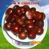 Chinese New Crop Chestnut