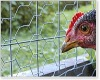 2012 BEST SALE Chicken coop hexagonal wire mesh