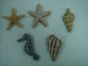 polyresin sea animals with magnet on back