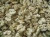 Yunnan original peeled Walnut Kernels