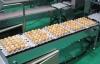 egg oil coating
