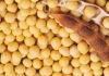 Soybean P.E