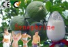 Synephrine(citrus aurantium extract) Loss rapid weight / CAS-94-07-5