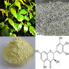 super Vine Tea Extract Dihydromyricetin 80%, 90%, 95%, 98%