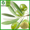 natural olive leaf extract Powder oleuropein 20%-98% (HPLC)