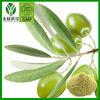 natural olive leaf extract Powder oleuropein 20%-98% (HPLC)