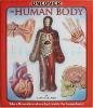 eastoys human body book