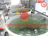 Compact Recirculating System for fish hatchery