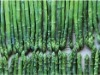 sell asparagus - frozen, pesticide free!