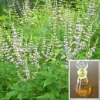 Natural Vitex Oil