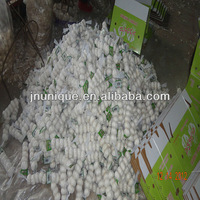 2012fresh new crop pure white garlic