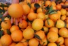 orange (navel orange)