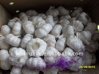 crop 2012 cold storage fresh pure white garlic red 5p packed