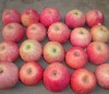Sweet and juicy qinguan apple(64~125)
