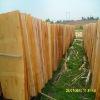 eucalyptus veneer (FSC certified) rotary peeled GH-2934