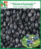 IQF whole blueberry fruit