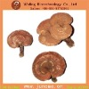 Organic JUNCAO Dried Whole Red reishi
