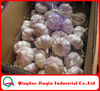 JQ 5CM Normal White Garlic From Shandong Province China