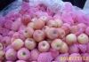 Fuji apple in Shandong of China