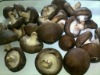 Cultivated frozen whole shiitake