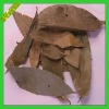 Hot Selling Spices/2012 Dried Cinnamomum Leaves