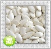 New crop Pumpkin Seeds