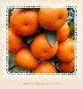 Nanfeng Fresh Baby Mandarin